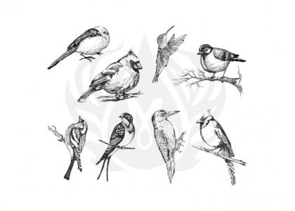Aviary (Sml) Silkscr