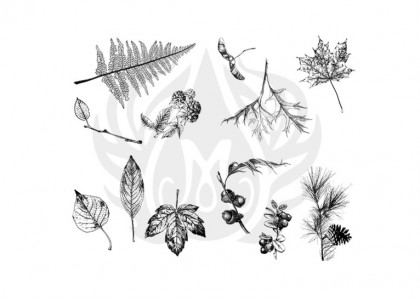 Botanical (Leaves) S